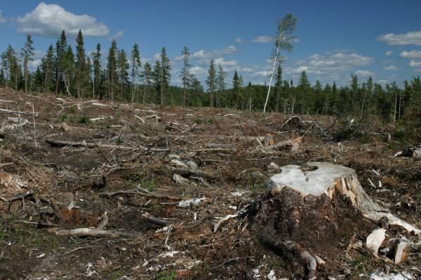 external image 1546_deforestation.jpg