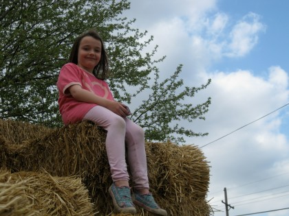 Evangeline, daughter of KCCUA's farm manager Alicia, watches over her stomping ground from the top of the hay bales.