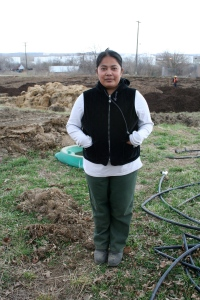 Aye Aye Nu, a refugee from Thailand, works at Juniper Gardens, an urban community farm in Kansas City, Kansas.