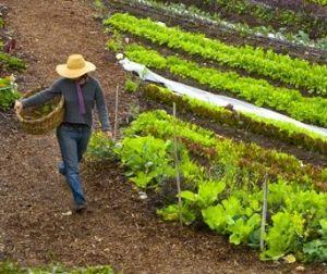 urban-farmer