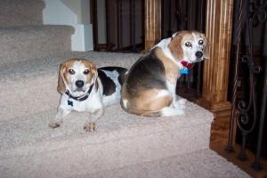 My dogs Homer and Martha